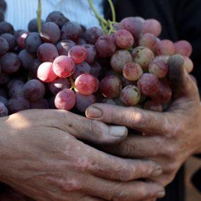 Les doux fruits de la Palestine