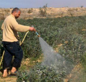 L'armée pulvérise des herbicides le long de la frontière de Gaza, détruisant les cultures sur 200 hectares