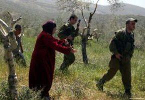 1 070 arbres palestiniens vandalisés depuis le début de la saison de récolte des olives